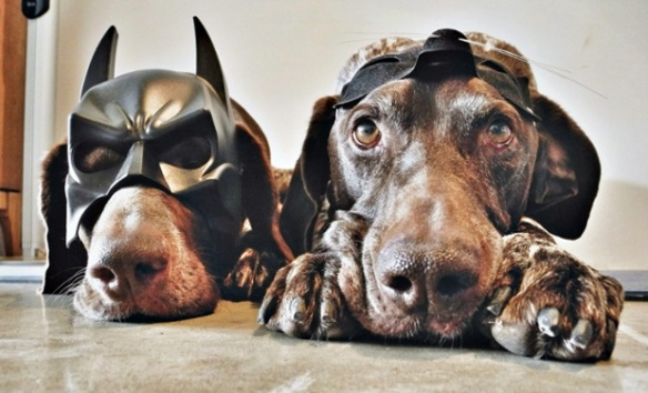 Travis and Gus - two German shorthaired pointers - are the furry duo in this shoot by Canadian photographer Steph McCombie (2)