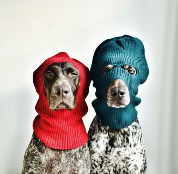 Travis and Gus - two German shorthaired pointers - are the furry duo in this shoot by Canadian photographer Steph McCombie (4)